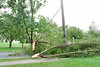 20110828_Hurricane_Tree_Damage_014_out