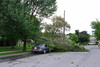 20110828_Hurricane_Tree_Damage_020_out