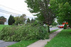 20110828_Hurricane_Tree_Damage_021_out