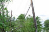 20110828_Hurricane_Tree_Damage_027_out
