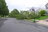 20110828_Hurricane_Tree_Damage_039_out