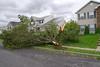 20110828_Hurricane_Tree_Damage_051_out