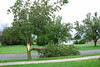 20110828_Hurricane_Tree_Damage_017_out