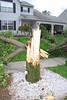 20110828_Hurricane_Tree_Damage_058_out