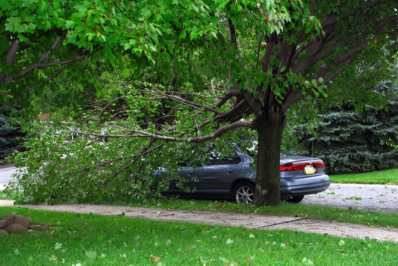 20110828_Hurricane_Tree_Damage_062_out
