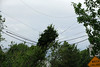 20110828_Hurricane_Tree_Damage_006_out