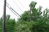 20110828_Hurricane_Tree_Damage_025_out