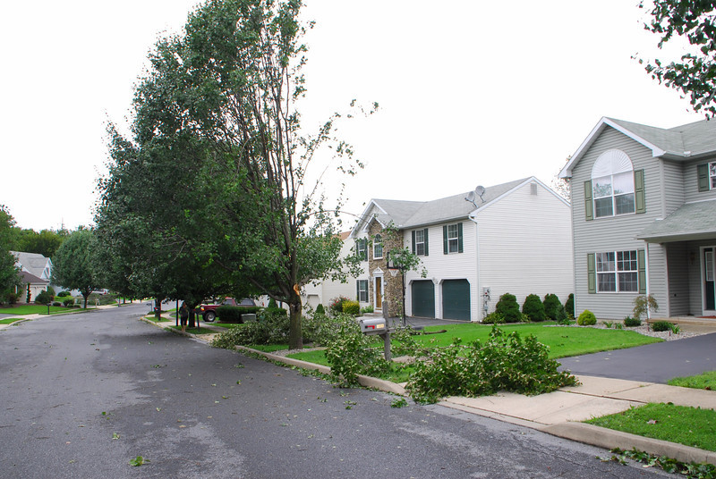 20110828_Hurricane_Tree_Damage_024_out