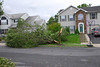 20110828_Hurricane_Tree_Damage_035_out