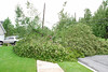 20110828_Hurricane_Tree_Damage_009_out