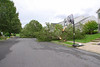 20110828_Hurricane_Tree_Damage_038_out