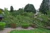 20110828_Hurricane_Tree_Damage_059_out