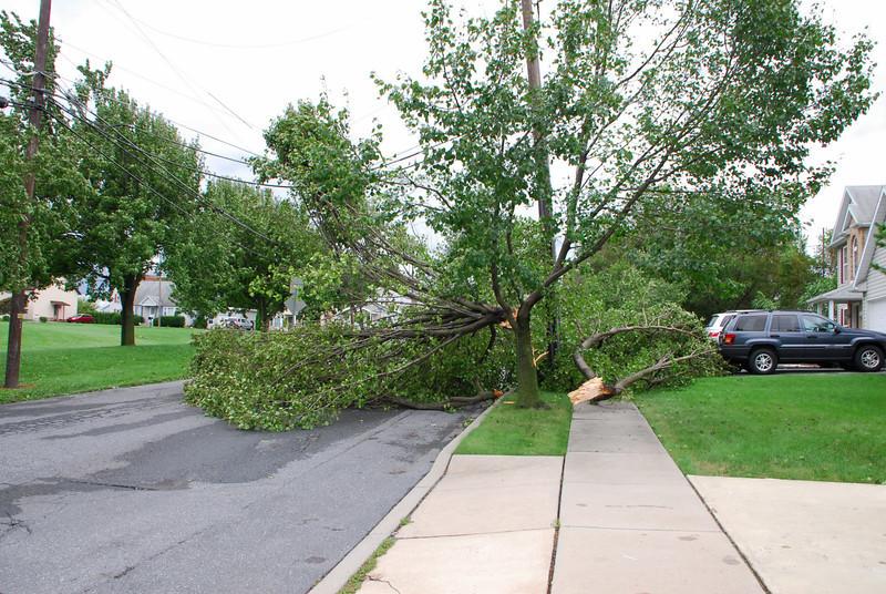 20110828_Hurricane_Tree_Damage_016_out