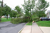 20110828_Hurricane_Tree_Damage_016_out