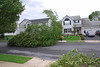 20110828_Hurricane_Tree_Damage_030_out