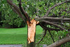 20110828_Hurricane_Tree_Damage_026_out