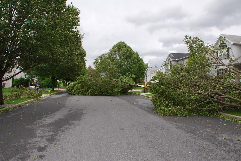 20110828_Hurricane_Tree_Damage_050_out