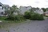 20110828_Hurricane_Tree_Damage_055_out