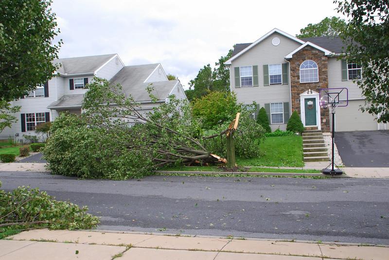 20110828_Hurricane_Tree_Damage_034_out