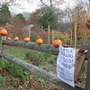 This seasonal display of jack-o'-lanterns was created by mother and son Carol Collins and Liam McCombe. By Wednesday afternoon — Halloween — the creative pair added a note to their display of three full-size and ten small carved pumpkins, inviting passersby to stop and enjoy a piece of Halloween candy. The arrival of Storm Sandy two days earlier may have put a damper on trick or treating for the second year in a row, but this team did what they could to spread a little cheer. (Hicks photo)