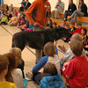 Mission: Wolf Co-Founder Kent Weber visited Reed Intermediate School on Wednesday, October 24, with three wolves. Mr Weber is shown introducing Zeab, a 2-year-old gray wolf, to students. —Bee Pho-tos, Hallabeck