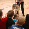 Abraham, a 6-year-old wolf and dog mix with Mission: Wolf was also introduced to Reed students on Wednesday, October 24.