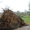 Like elsewhere in Newtown, a large tree tipped at the roots and fell at Dickinson Park. (Bobowick photo)
