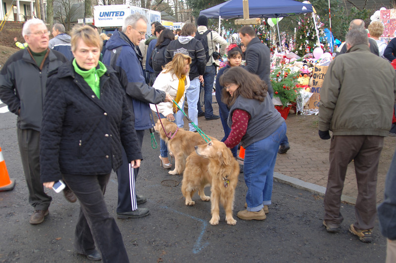 Michael Jones walks his dogs Smartie Jones and Abbie Einstein through Sandy Hook near the growing memorial of flowers, candles, toys, and prayer-filled messages. His dogs, members of a Golden Retriever Club, brought comfort to the many people from Newtown and surrounding towns who stopped to pet them. (Bobowick photo)