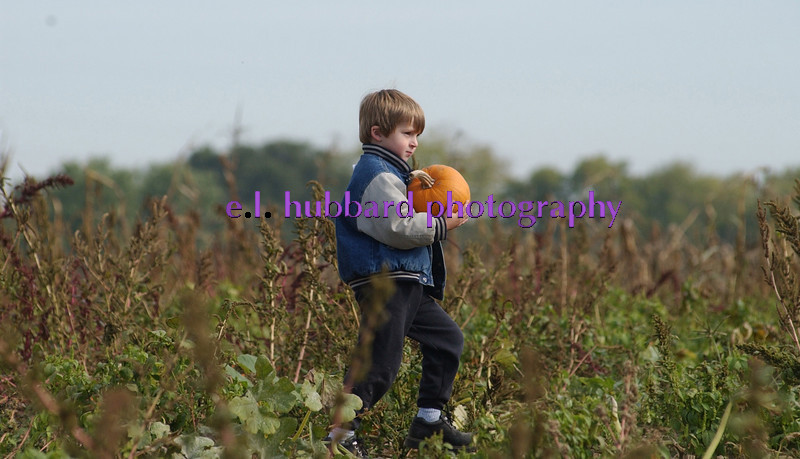 E.L. HUBBARD/JOURNALNEWS<br /> Tom Frondorf, 4, of Cleves, a student at Three Rivers Nursery School Coop, carries his selection through the pumpkin patch at Brown Farm Market Friday, 10/18/02.