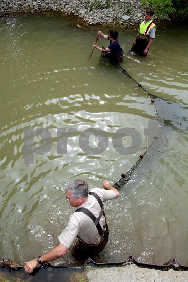Roger Thoma, Enviromental Specialist Two, Ohio EPA, bottom, and Heather Laver, Ohio EPA, pull a seine through Paddy's Run at Millville Shandon Rd. Wednesday, 5/28/03.  Watching is Matt Raymond, ODOT.