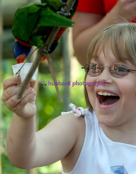 E.L. HUBBARD/JOURNALNEWS<br /> Brenna (cq) Kesson (cq), 8, from Dayton, laughs as a lorikeet drinks nectar from the cup she holds up in the open-air aviary Lorikeet Landing at the Cincinnati Zoo Friday, 05/26/06. The exhibit is part of Awesome Aussie Adventure at the zoo from May 27 to September 4.