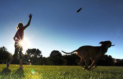 Frisbee fetch