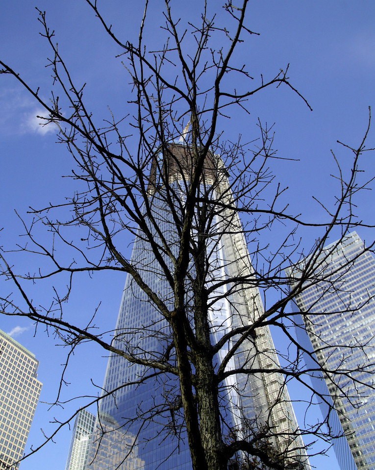 After the winter of 9/11, new life of spring will emerge.