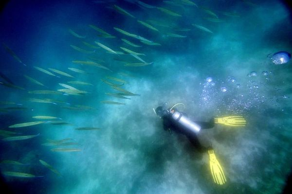2/8/2005 -- South of Phuket Island, Thailand -- On Dive Asia dive boat excursion to islands south of Phuket Island. A diver skates the bottom of the ocean floor during a training dive  several hours south of Phuket Island in Thailand on Wednesday, February 8, 2005. The reefs were variably damaged by the tusnami, but some say the diving is as good as ever  Project on Tsunami recovery by Dina Rudick and John Donnelly. Globe Staff Photo, Dina Rudick.