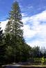 Untitled_HDR2 vert tree rd © bob wilson 2010