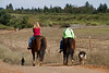 _MG_1642 laura and linda horses dogs  © bob wilson 2010