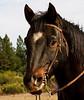 _MG_1609 horse head  © bob wilson 2010