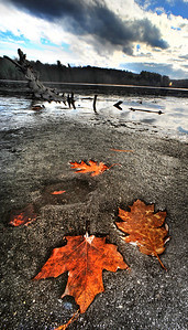 Frozen leaves on the bank of the Androscoggin River at the Turner Boat Launch begin to thaw with unseasonably warm weather Wednesday morning.