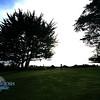 Pacific Grove_IMG_1260