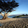 Carmel_Beach_Ocean_Tree_IMG_1275