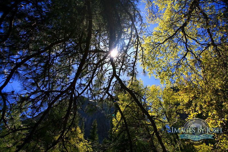 Yosemite_El_capitan_IMG_0765