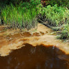 James Holland (Altamaha River Keeper) testing and monitoring a water source pollution issue in Burnett Creek on 09/26/07