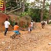 Niños y mulas de Campo Bijao.