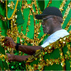 Shurland Alfred of Dorchester makes preparations before the carnival gets underway.