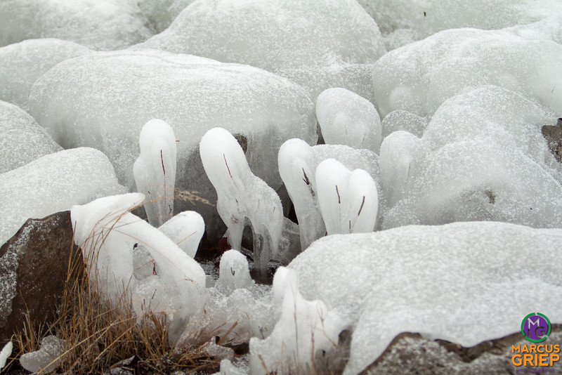 Plant matter and rocks encased in ice built up slowly from the water spray from Lake Champlain then frozen where it lands.
