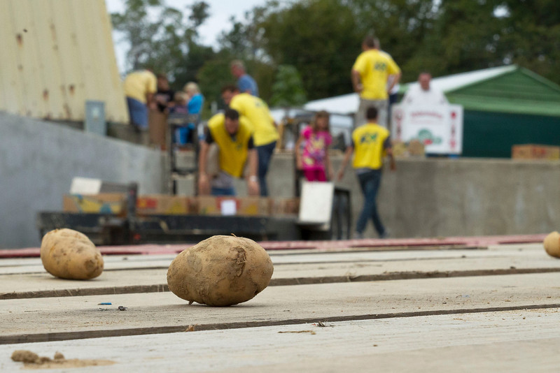 """""""Some of the potatoes gathered that day were served that very evening to those in need."""""""