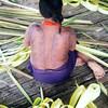 Los días 29 y 30 de agosto de 2012, el pueblo Nonam celebró el primer aniversario de su retorno al territorio. Los días coincidieron con las fiestas de Santa Rosa, patrona de América que da nombre a su pueblo. Unos días antes decoraron el Resguardo con palma de guadua, pintaron sus cuerpos y prepararon el viche y el guarapo, bebidas tradicionales.