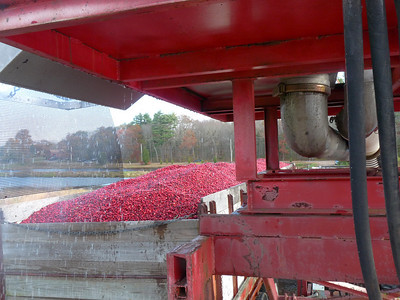 A view from underneath the platform into the back of the berry truck. Another successful load completed. Now the truck sits for a bit so all the water can drain out before it hits the road.