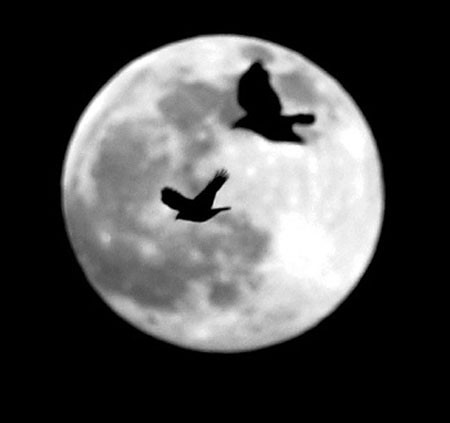 Crows look for a place to land in Kennedy Park in Lewiston as a full moon rises.