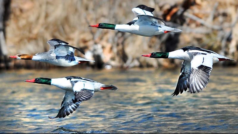 Common flight